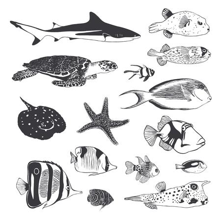 Vecteur noir et blanc Collection de la mer et de l'océan habitants. Poissons, requins, tortues.