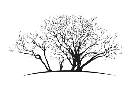 silhuette: Vector spreading tree silhuette. Isolated black on white