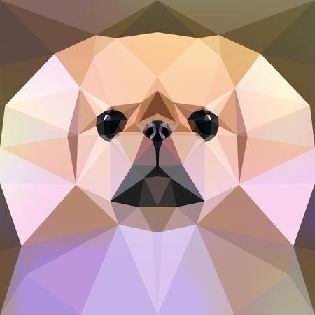 pekingese: Vector illustration. Face of a Pekingese dog