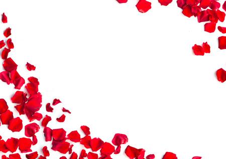 Romantic red rose petals on white background 版權商用圖片