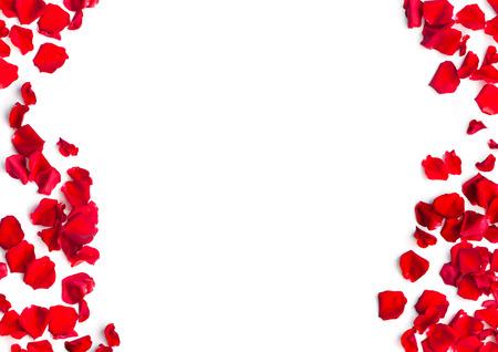 roja romántica de pétalos de rosa sobre fondo blanco