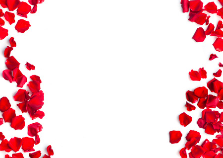 Romantic red rose petals on white background Banque d'images