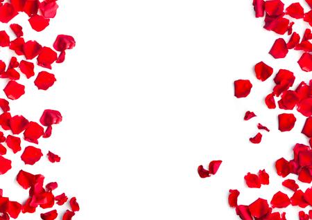 Romantische rote Rosenblätter auf weißem Hintergrund