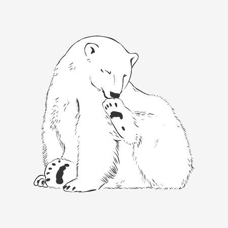menacing: Vector illustration: cute polar bear washes