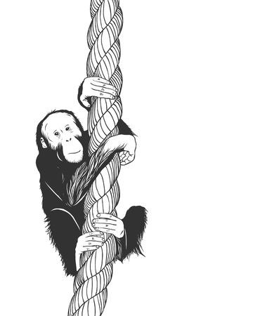 Vector Zoo Ilustración. Poco Basculante Mono Babuino En Una Cuerda ...