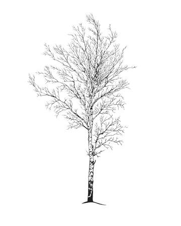 birch tree lonely lender silhouette on white Stock Illustratie