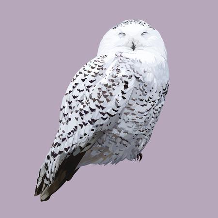 carnivores: White polar owl. Detailed realistic vector illustration Illustration