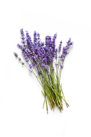 Lavander fresh flowers bouquet on white background Banco de Imagens