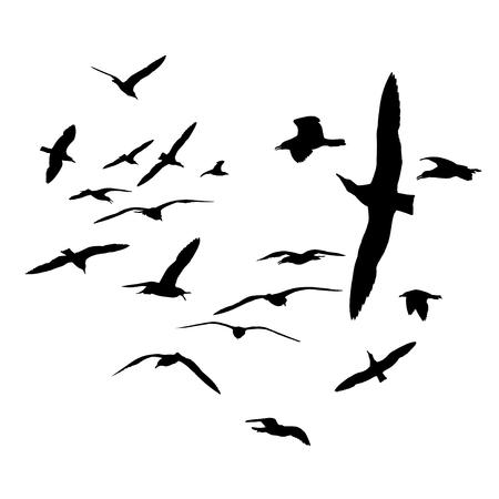 Flock of sea gull birds. Black on white silhouettes