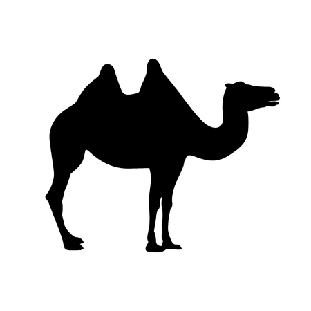 bactrian camel vector black on white silhouette  イラスト・ベクター素材