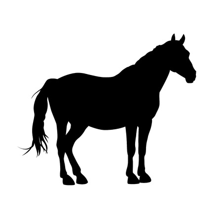 Silhouette of horse. Black on white vector