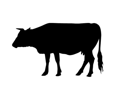 cow silhouette black on white Illustration