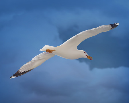 at the bottom of: White seagull on blue sky. Bottom view. Vector Illustration