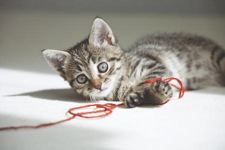 hilo rojo: Peque�o gatito lindo que juega con hilo rojo