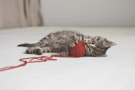 hilo rojo: Juegos del gatito con la mara�a de hilo rojo