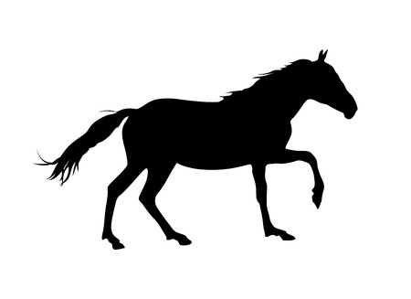 steed: Silhouette of horse. Black on white vector