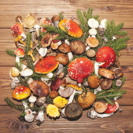 fungi: Assorted colorful mushrooms on a wooden background Stock Photo
