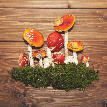 deceitful: Amanita red mushrooms on a wooden background