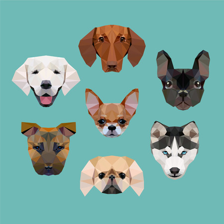 pekingese: polygonal dogs vector collection (husky, staffordshire terrier, pekingese, french bulldog, dachshund, labrador, chihuahua)