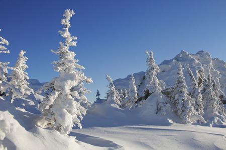 swept: Mountain range Zyuratkul, winter landscape. Snow covered spruces Stock Photo
