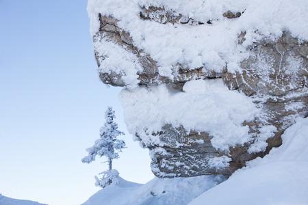 ural: Little fir and a large rock. Snowy winter landscape