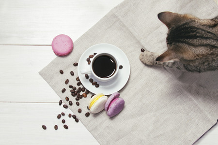 Cute still life with coffee, macaroons and cat Stockfoto