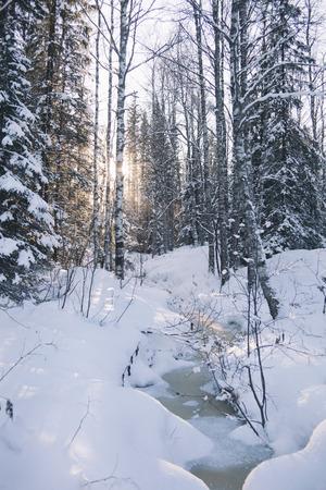 frozen creek: Frozen creek in winter snowy forest. Ural, Zyuratkul Stock Photo