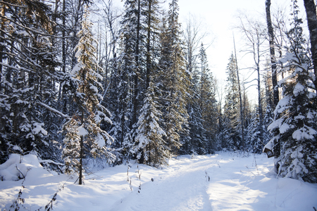 ural: Sunny snowy forest and path. Ural, Zyuratkul Stock Photo