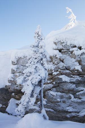 swept: Snow covered spruces and rocks. Mountain range Zyuratkul, winter landscape.