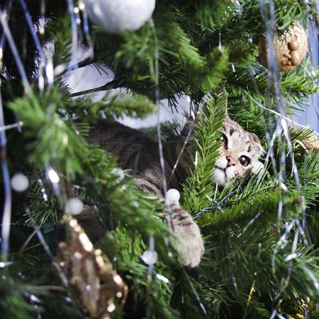 Cat on Christmas tree. Naughty cute kitten. New Year Stock Photo