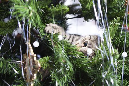 Cat on Christmas tree. Naughty cute kitten. New Year 版權商用圖片