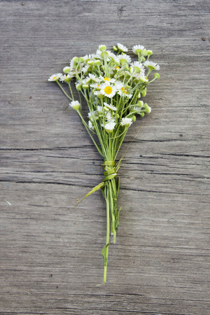 field of daisies: Bouquet of small field daisies on old wooden background