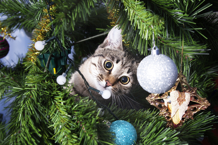 Cat on Christmas tree. Naughty cute kitten. New Year Stock Photo