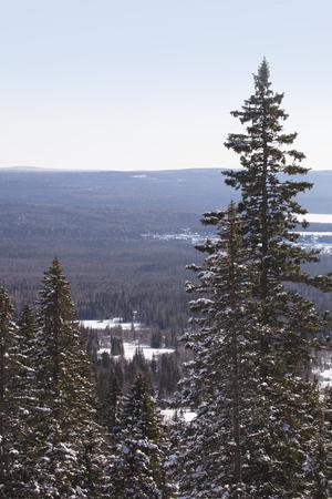 Fir forest. Top view. Winter nature landscape