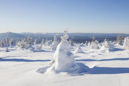 ural: Mountain range Zyuratkul, winter landscape. Snow covered fir trees