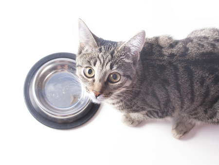 Hungry cat near empty bowl asks feed it Banque d'images