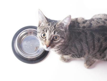 Hungry cat near empty bowl asks feed it Foto de archivo