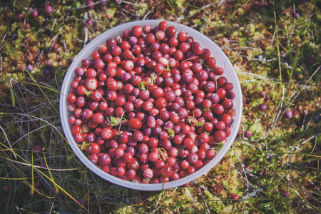 Bowl with fresh red berries (cranberries). Healthy food Stock Photo