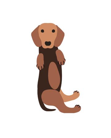 Vector flat illustration - ginger dachshund dog puppy