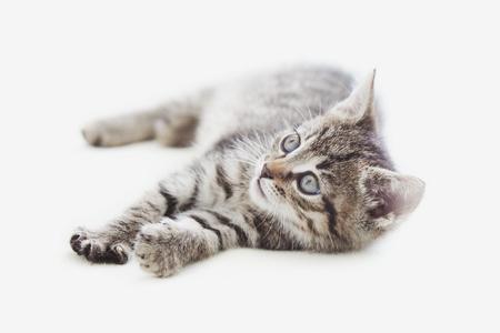 Leuk tabby kitten liggend op lichte achtergrond