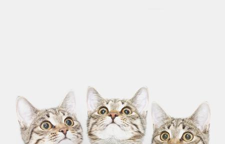 Drie schattige kittens wachten om te worden gevoed (of leuk vindt). Nieuwsgierige katten gezichten kijken omhoog Stockfoto
