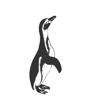 Penguin. Black and white vector doodle illustration