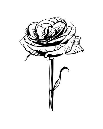 Rose flower. Black on white vector illustration Иллюстрация
