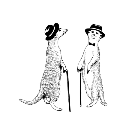 Two walking gentleman meerkats. Vector hand drawn illustration