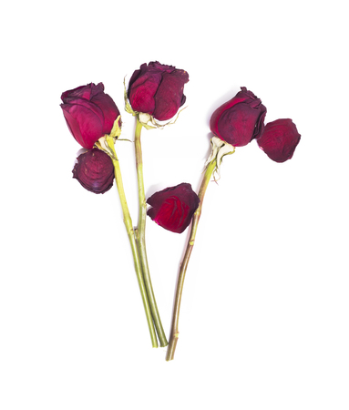 Three dried red roses isolated on white background