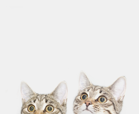 Two cute kittens are waiting to be fed. Curious cats faces looking up Stockfoto