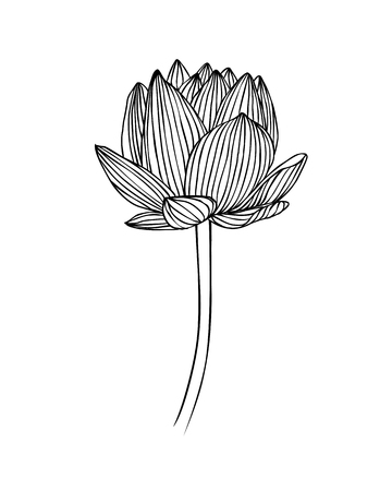 Linear water lily flower. Lotus vector illustration
