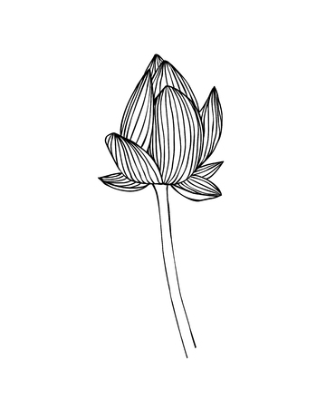 Linear lotus flower. Water lily vector illustration Illustration