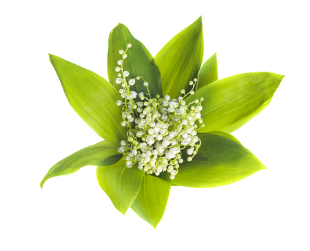 Bouquet of lilies of the valley on white background. View from above