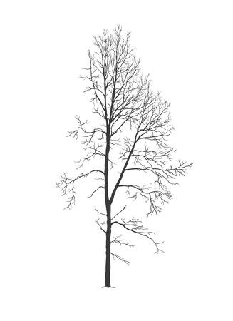 Silueta de vector realista de árbol de álamo temblón sin follaje